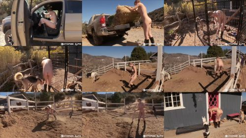 Beautifully nude Greyhound - Bondage Life – Greyhound The Farmer – Rachel Greyhound - Handcuffs Bondage