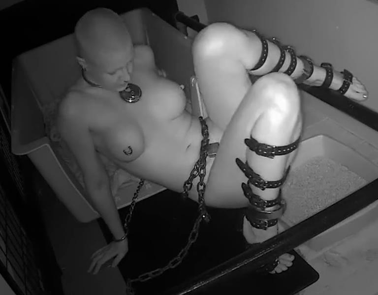 Extremely Uncomfortable Position - Bondage Life – Quiet Time (Extended Edition) Rachel Greyhound with heavy chain locked